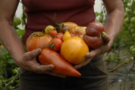 Qui a dit qu'une tomate doit être rouge et ronde ?