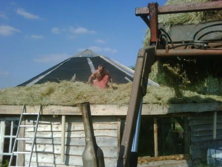 La yourte : toiture végétalisée