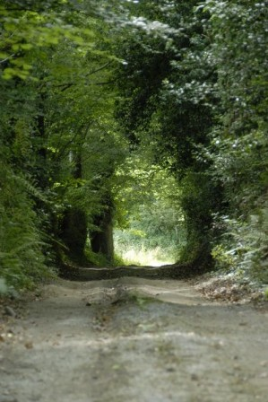 Le chemin creux qui mène à Moulin Coz